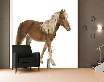 Immagine del prodotto Carta da parati adesiva - Pony