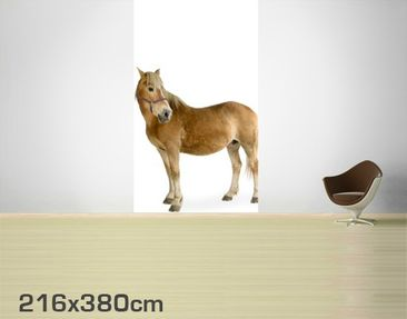 Product picture Photo Wall Mural Haflinger