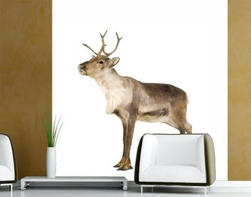 Product picture Photo Wall Mural Reindeer