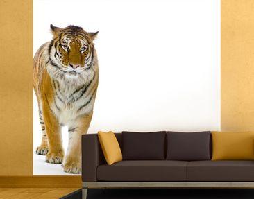 Produktfoto Selbstklebende Tapete - Fototapete Bengalischer Tiger