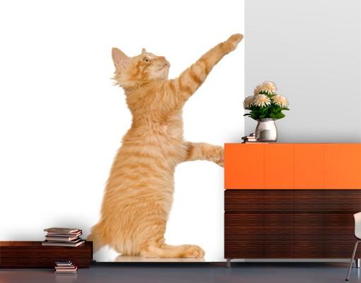 Produktfoto Selbstklebende Tapete - Fototapete Kätzchen mit Tätzchen
