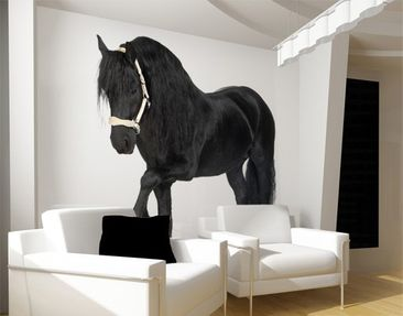 Produktfoto Photo Wall Mural Frisian Mare 288x270cm