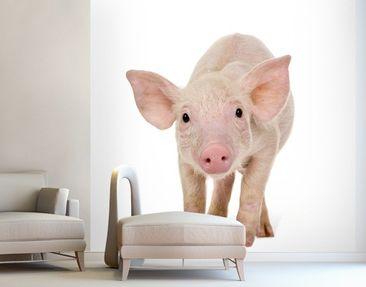 Produktfoto Photo Wall Mural Amazed Piglet
