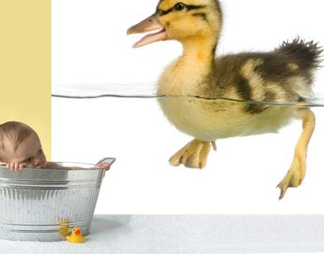 Product picture Photo Wall Mural Ducky I 288x270cm