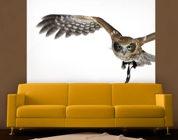 Produktfoto Photo Wall Mural Nocturnal Hunter