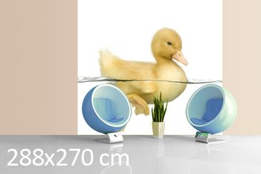 Product picture Photo Wall Mural Ducky II 288x270cm