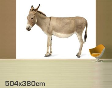 Product picture Photo Wall Mural Donkey