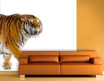 Produktfoto Selbstklebende Tapete - Fototapete Gefährlicher Tiger