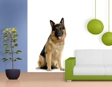 Produktfoto Photo Wall Mural German Shepard...