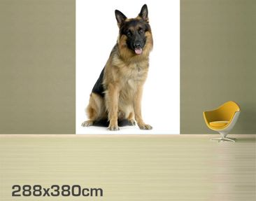 Product picture Photo Wall Mural German Shepard...