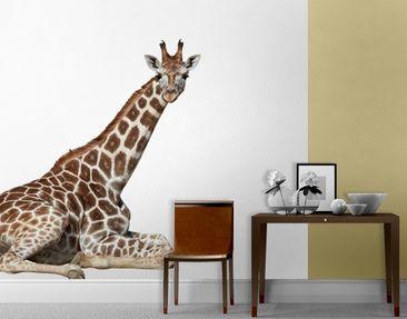Produktfoto Selbstklebende Tapete - Fototapete Liegende Giraffe