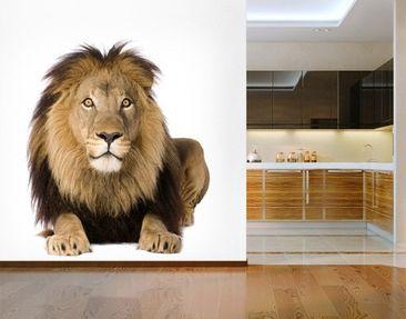 Produktfoto Selbstklebende Tapete - Fototapete König Löwe II