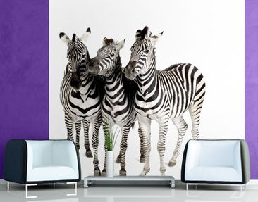 Produktfoto Photo Wall Mural Zebras