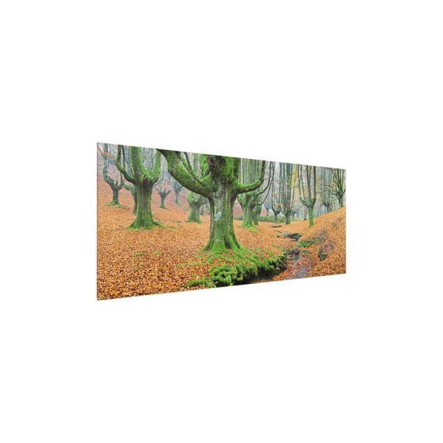 Produktfoto Glasbild - Buchenwald im Gorbea Naturpark in Spanien - Panorama