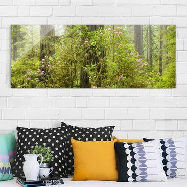Produktfoto Glasbild - Del Norte Coast Redwoods State Park Kalifornien - Panorama