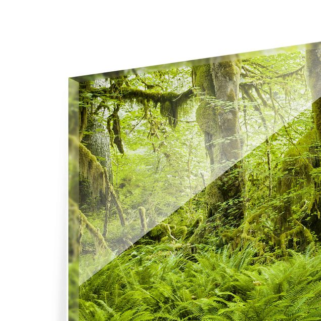 Produktfoto Glasbild - Hall of Mosses Olympic National Park - Panorama