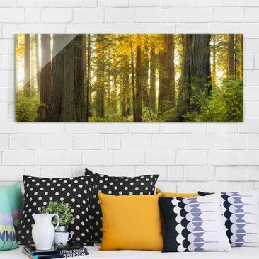 Produktfoto Glasbild - Redwood National Park - Panorama