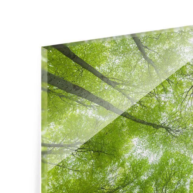 Produktfoto Glasbild - Buchenwald am Lindkogel - Querformat 2:3