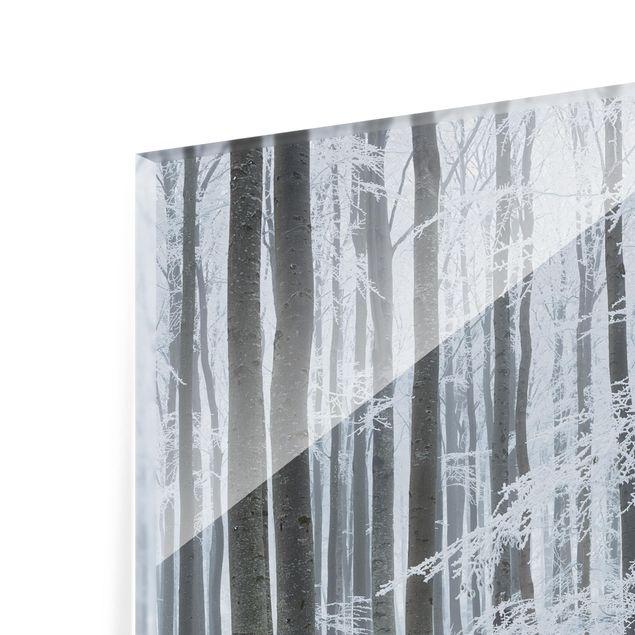 Produktfoto Spritzschutz Glas - Buchen mit Rauhreif - Quadrat 1:1
