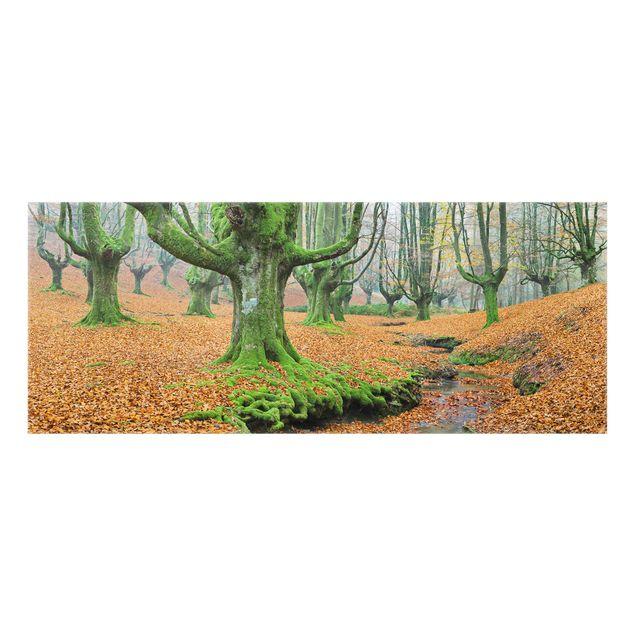 Produktfoto Spritzschutz Glas - Buchenwald im Gorbea Naturpark in Spanien - Panorama
