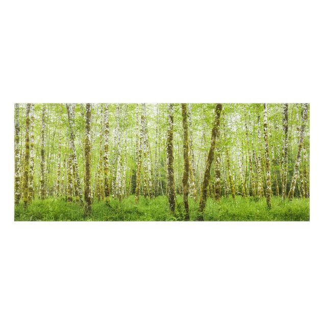 Produktfoto Spritzschutz Glas - Hoh Rainforest Olympic National Park - Panorama