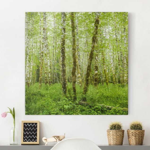 Produktfoto Leinwandbild - Hoh Rainforest Olympic National Park - Quadrat 1:1