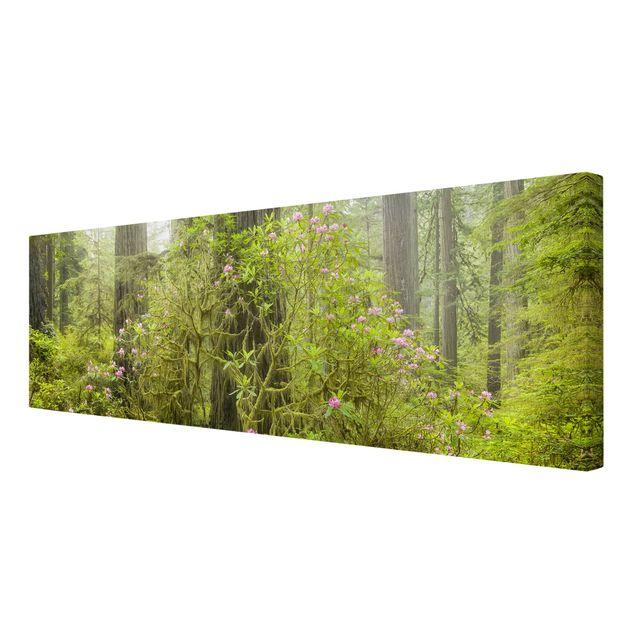 Produktfoto Leinwandbild - Del Norte Coast Redwoods State Park Kalifornien - Panorama 1:3