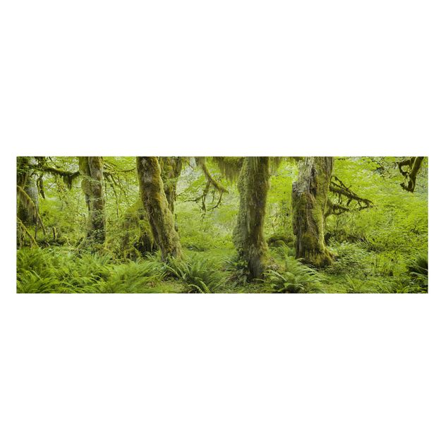 Produktfoto Leinwandbild - Hall of Mosses Olympic National Park - Panorama 1:3