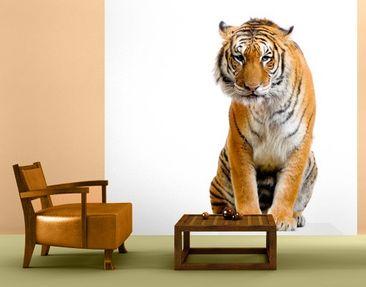Immagine del prodotto Carta da parati adesiva - Sitting Tiger