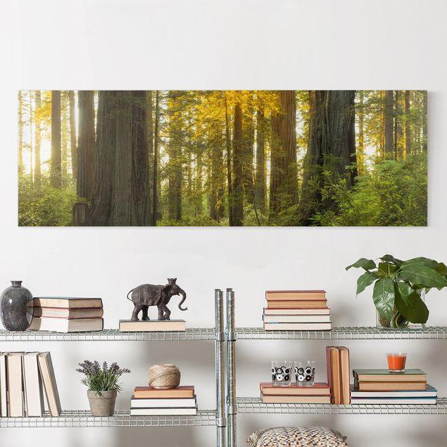 Produktfoto Leinwandbild - Redwood National Park - Panorama 1:3