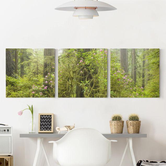 Produktfoto Leinwandbild 3-teilig - Del Norte Coast Redwoods State Park Kalifornien - Quadrate 1:1