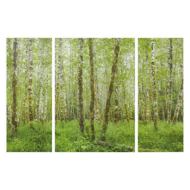 Produktfoto Leinwandbild 3-teilig - Hoh Rainforest Olympic National Park - Tryptichon