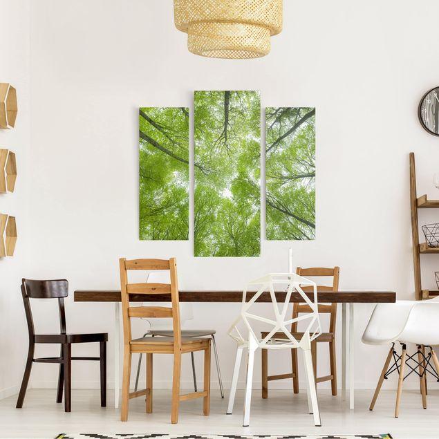 Produktfoto Leinwandbild 3-teilig - Buchenwald am Lindkogel - Galerie Triptychon