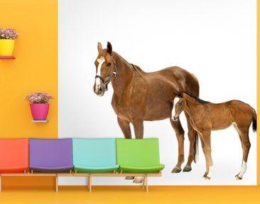Immagine del prodotto Carta da parati adesiva - Mare & Foal