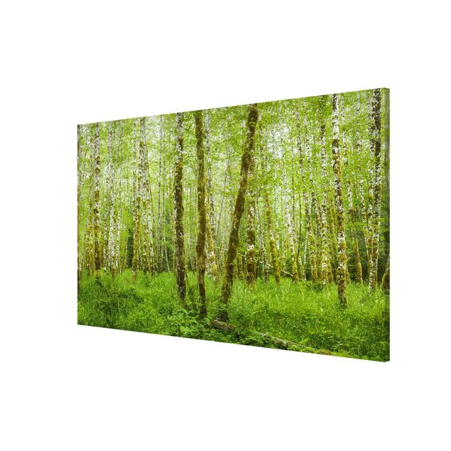 Produktfoto Magnettafel - Hoh Rainforest Olympic National Park - Memoboard Querformat 2:3