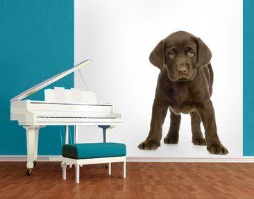 Immagine del prodotto Carta da parati adesiva - Puppy