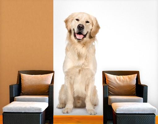 selbstklebende tapete fototapete golden retriever. Black Bedroom Furniture Sets. Home Design Ideas