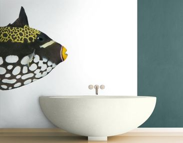 Produktfoto Photo Wall Mural Clown Triggerfish