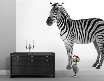 Immagine del prodotto Carta da parati adesiva - Chubby Zebra