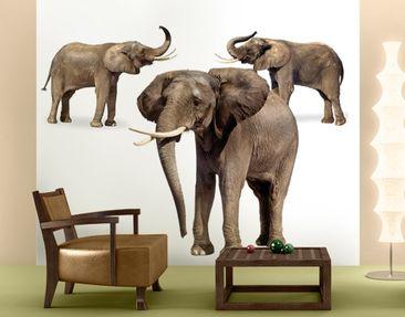 Immagine del prodotto Carta da parati adesiva - Elephant Set 288x270cm
