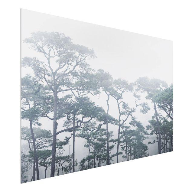 Immagine del prodotto Stampa su alluminio - Treetops In Fog - Orizzontale 2:3