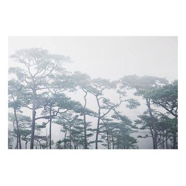 Product picture Aluminium Print - Treetops In Fog -...