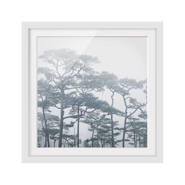 Product picture Framed print - Treetops In Fog - Square...