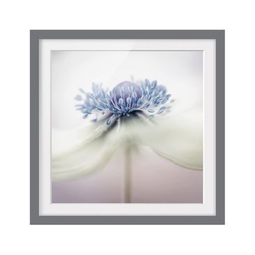 Product picture Framed print - Anemone In Violet -...