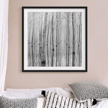 Produktfoto Framed print - Birches In November -...
