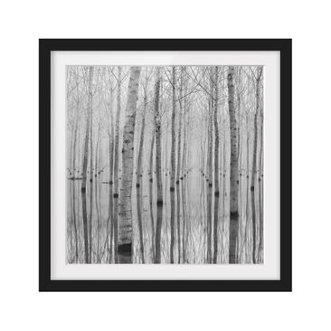 Product picture Framed print - Birches In November -...