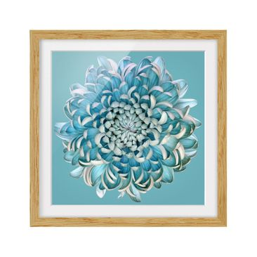 Product picture Framed print - Blue Chrysanthemum -...