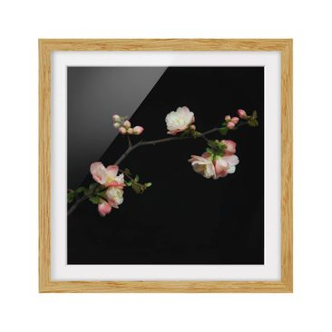 Product picture Framed print - Blossom Boughs Apple Tree...