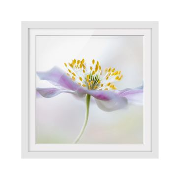 Product picture Framed print - Windflower In White -...