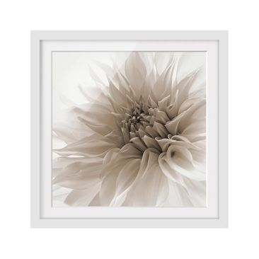 Product picture Framed print - Dahlia In Dignity -...